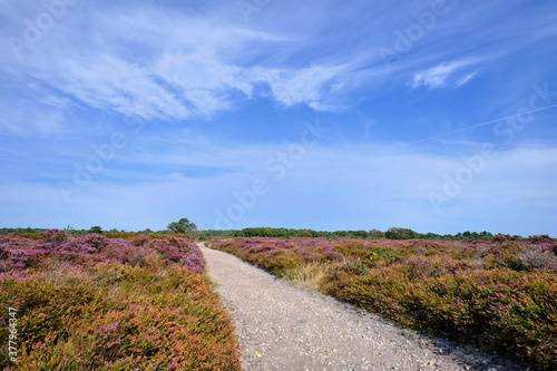 Dunwich Heath on the Suffolk coast Wallpaper Mural