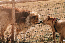 Two Dogs Saying Hello To Each Other Between A Fence
