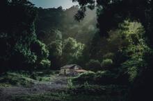 Paisaje Misterioso En Bosque A...