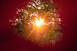 Low evening sunat sunset and garden foliage in center hole of red autumn leaf. Autumn background.