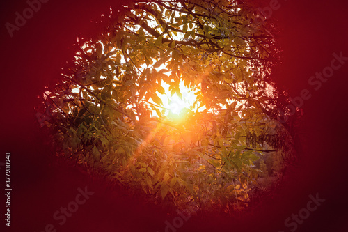 Low evening sunat sunset and garden foliage in center hole of red autumn leaf Canvas-taulu