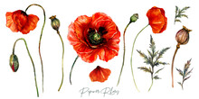 Collection Of Red Poppies Wate...