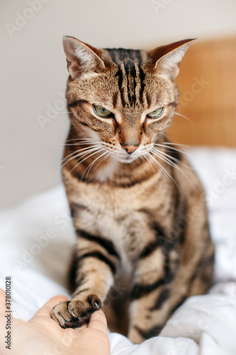 Canvas Print Man giving open empty hand palm to tabby cat