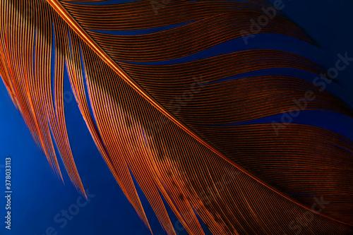 Macro photo of brown detailed single feather on deep dark background underwater Fototapet