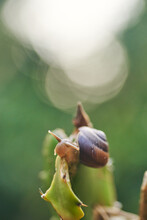 Small Snail At Nature In Clo...