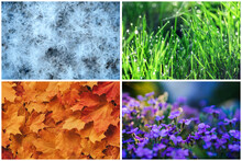 Four Seasons Collage: Winter, Spring, Summer, Autumn. Blue Snowflakes, Green Grass, Orange Leaves, Purple Flowers