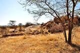 Fototapeta Sawanna - Widok w parku narodowym Samburu (Kenia)