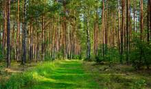 Waldwege Und Kleine  Seen In B...