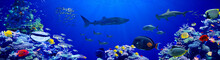 Panorama Background Of Beautiful Coral Reef With Marine Tropical Fish In Central Pacific That Whale Shark Visited