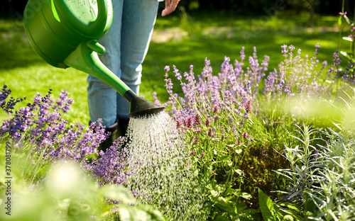 Tela gardening and people concept - young woman with watering can pouring water to fl
