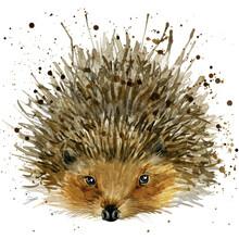 Cute Watercolor Cartoon Hedgehog. Forest Animal Illustration.