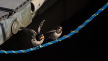 SWALLOW - Birds On The Mooring...