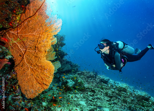 Fotografie, Obraz A scuba diver looking at a colorful fan coral in the Indian Ocean, Maldives