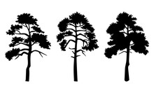 Silhouette Of Three Trees With...
