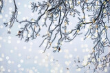 Winter new year christmas concept. Branches in white frost and sparkling lights. Blurred winter natural background.