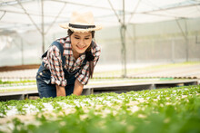Portrait Of Young Woman Farmer Harvesting Vegetable From Hydroponics Farm In The Morning.Organic Fresh Vegetable,Farmer Working With Hydroponic Vegetables Garden At Greenhouse.copy Space.