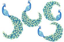 Drawn Peafowl. Clip Art Set On...