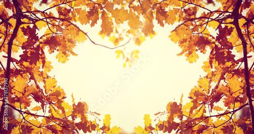 Fototapeta Yellow fall leaves of trees obraz