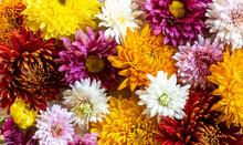 Chrysantemum Autumn Bouquet Lo...