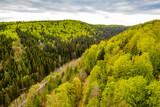 Fototapeta Na ścianę - Wald im Frühling