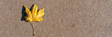 Dry Yellow Maple Small Leaf On...