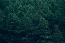 Dark Forest During Summer