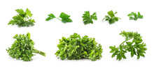 Set With Green Parsley On Whit...