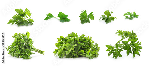 Obraz na plátně Set with green parsley on white background. Banner design