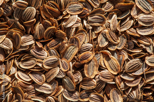 Valokuvatapetti seed dill on a wooden table, macro, Natural dill seeds (Anethum graveolens)