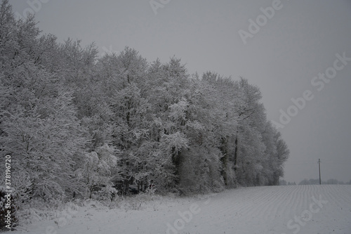 trees in snow © JeanMarie