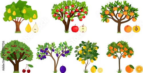 Tablou Canvas Set of different fruit trees with ripe fruits isolated on white background