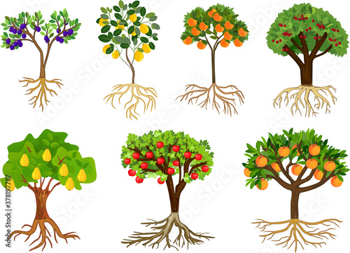 Set of different fruit trees with ripe fruits and root system isolated on white background Fotobehang