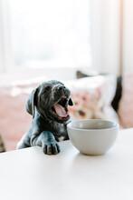 Puppy Eating Breakfast