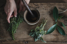 Closeup Of Woman's Hands Picking Fresh Herbs