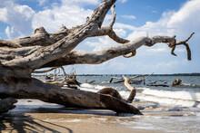 Bones Beach, Little Talbot Isl...