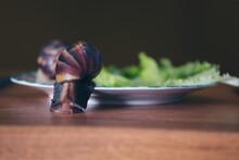2 Large Snails Close-up. Anima...