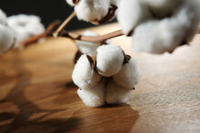 Cotton Boll Isolated On Table....