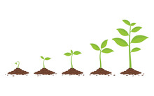 Plants Growing In The Ground. Phases Plant Growing.