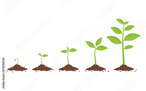 Plants growing in the ground. Phases plant growing. Fotobehang