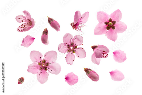 arrangement of pink peach flowers and buds on white background