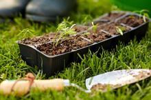 Gardening, Eco And Organic Con...