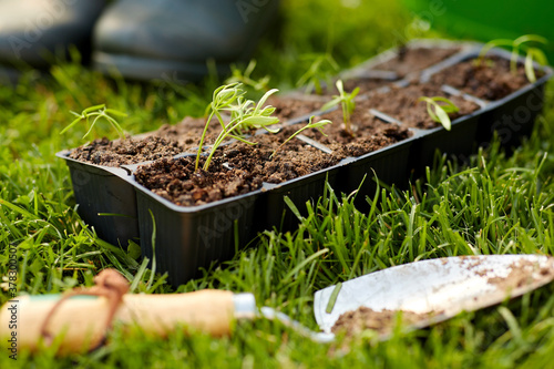 Photo gardening, eco and organic concept - seedlings in starter pots tray with soil at