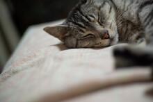 可愛い寝顔  サバト...