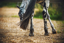 A Beautiful Spotted Horse With...