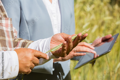 Fototapeta  An agronomist showing the quality of grain crops to a businesswoman with tablet in a rye field. Teamwork of a farmer and a business woman in agriculture. obraz