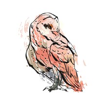 Hand Drawn Vector Abstract Graphic Owl Illustration In Pastel Colors Isolated On White Background. Boho Painting Print Design. Zoo And Wildlife Bird Illustration