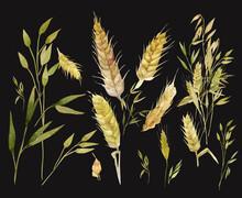 Watercolor Wheat Ears Pattern....