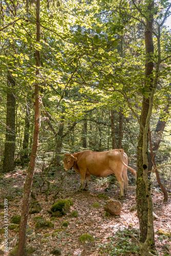 Fantástico paisaje en el bosque con hábitat animal en Aigüestortes, Cataluña, España Canvas Print