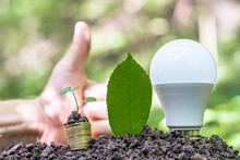 Light Bulb And Stack Of Coins With A Plant On The Ground. Symbol Of Investment Or Income Planning Through Savings