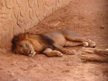 Wild Animals At The Dubai Zoo